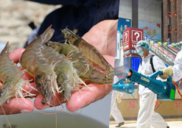 China Detecta Restos de COVID-19 en Envases de Camarones Importados de Ecuador